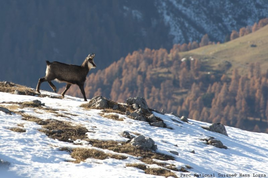 Workshops and exchanges on Mountain Biodiversity in the Alps: the involvement of the network